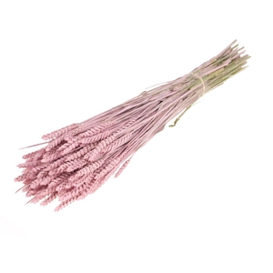 Tarwe pink misty