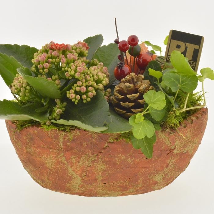 <h4>arr. Planten PTHI2251</h4>