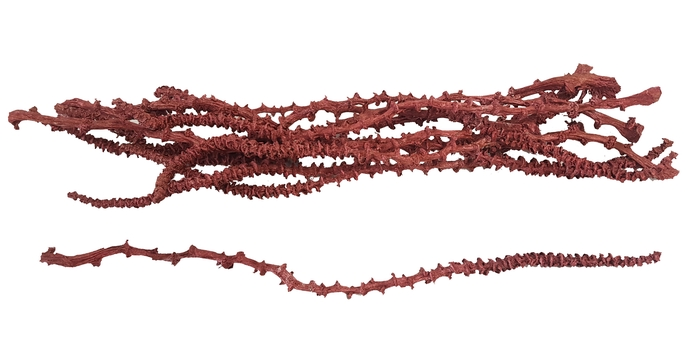<h4>Banana stem 10pc in poly Metalic Antique Red</h4>