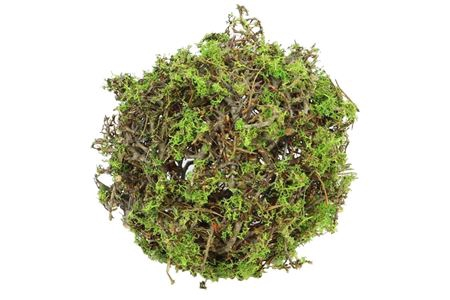 <h4>Ball Bonsai Mossed D25.0 Nat/green</h4>
