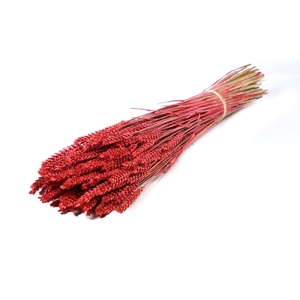 Tarwe (triticum) red