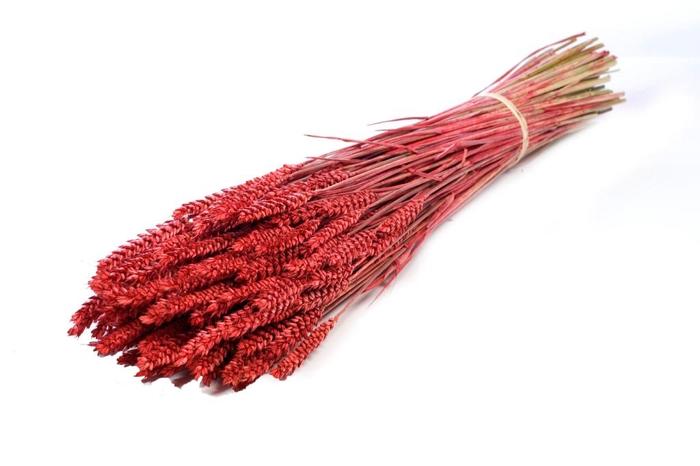 <h4>Tarwe (triticum) red</h4>