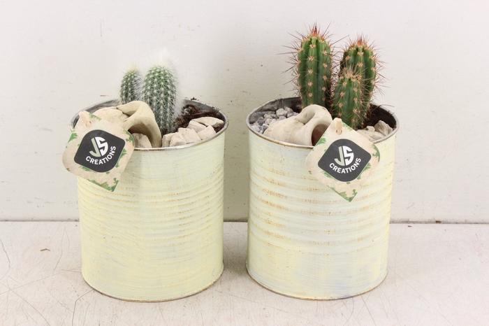 <h4>arr. JS Cactus - Blik geel</h4>