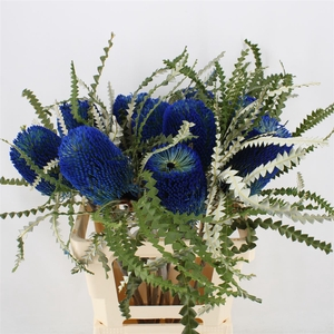 Banksia Speciosa Blue