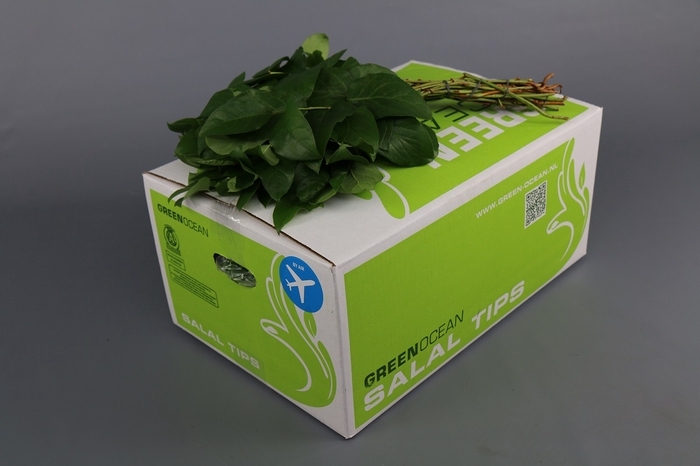 <h4>Salal  Tips Green Ocean AIR</h4>