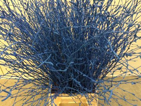 <h4>Berkentak Blue 70cm</h4>