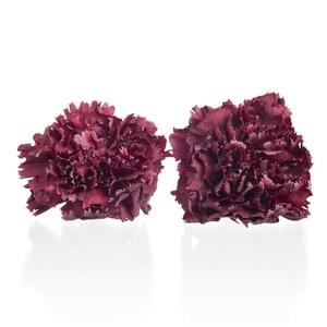 Carnation (anjer) Bordeaux 4,5-5cm