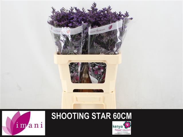 <h4>LIM SHOOTING STAR</h4>