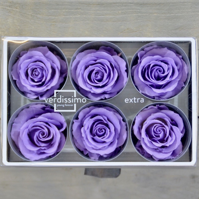 <h4>R PR M Lilac</h4>