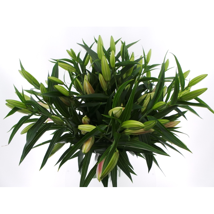 <h4>bouquet Mono Lelie Oriental Roze x3 60cm</h4>