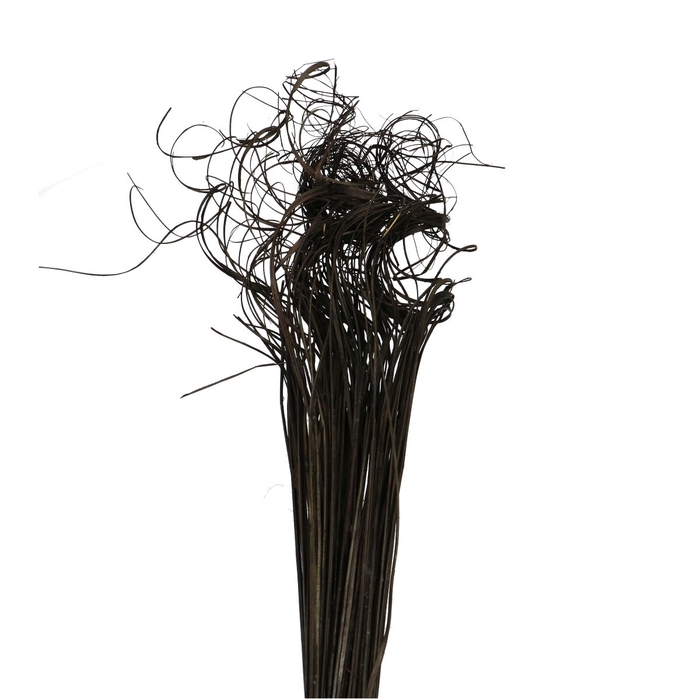 <h4>Dried articles Curly TingTing 70cm 200g</h4>
