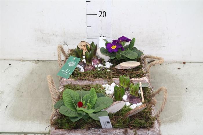 <h4>Arr Hyacinth In Houten Dieblad Met Hengsel</h4>