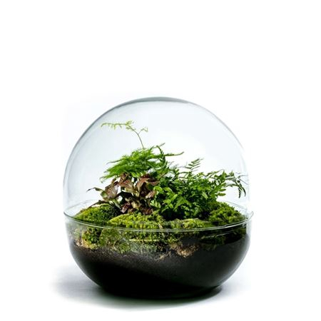 <h4>Gccr-2102 Growing Concepts Biodome L</h4>