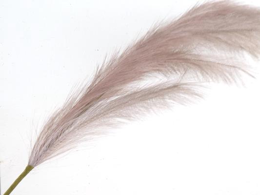 <h4>Af Pampas 130cm Lilac</h4>