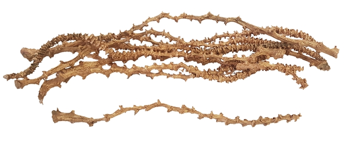 <h4>Banana stem 10pc in poly Antique Gold</h4>