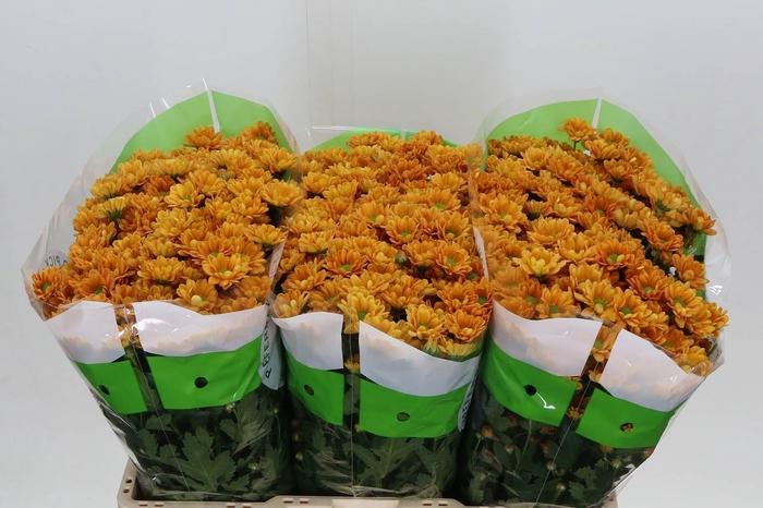 <h4>Chrysant santini Rossi Orange</h4>