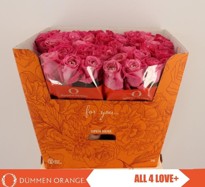 R GR ALL 4 LOVE +