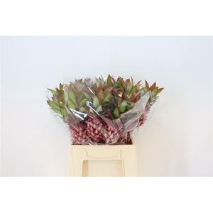 Ananas Nina Medium 50cm