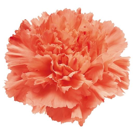 <h4>Di St Hermes Orange</h4>