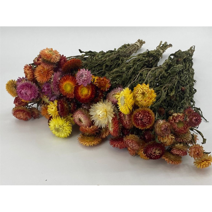 <h4>DRIED FLOWERS - HELICHRYSUM MIXED</h4>