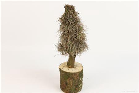 <h4>TREE EUPHORBIA H50.0</h4>