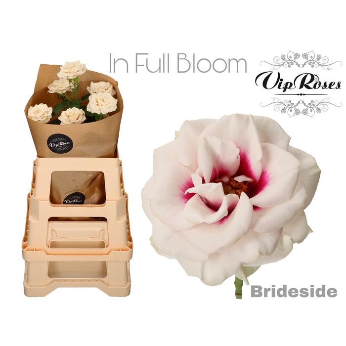 <h4>R GR VIP BRIDESIDE FULL BLOOM</h4>
