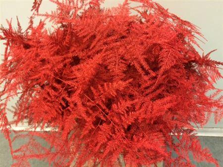 <h4>Asp. 1e Red</h4>
