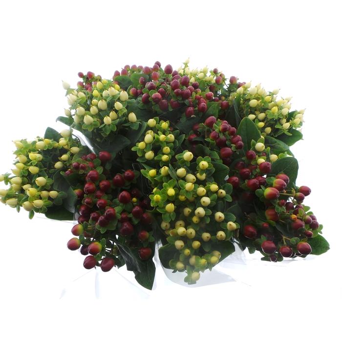 <h4>Bouquet Mono Hypericum x5 mix 50cm</h4>