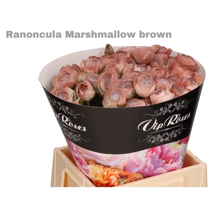<h4>RAN OV MARSHMALLOW BROWN</h4>