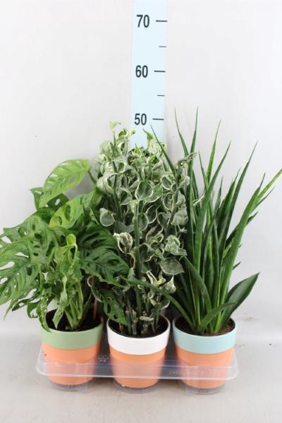 <h4>Planten Groen   ...mix  3</h4>