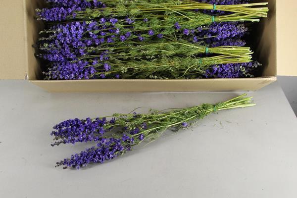 <h4>Df Delphinium Lavender Bs 50gr</h4>
