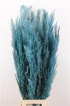 <h4>Dried Pampas Gras Licht Blauw ( 8 Stem )</h4>