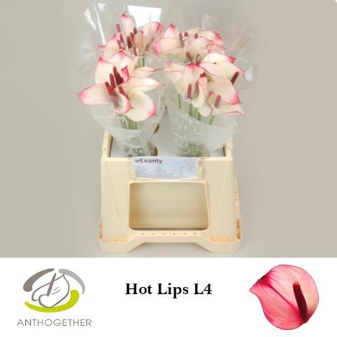 <h4>ANTH PR AMA HOT LIPS 40 L4.</h4>
