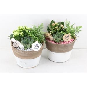 arr. PL - Ker. pot Duo 232/2 - roze/wit