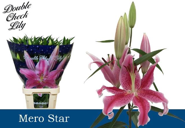 <h4>LI OR MERO STAR</h4>