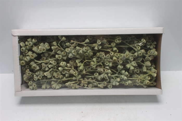 <h4>Conical Gum Branch Green Frosted (50 St)</h4>