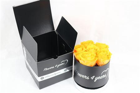 <h4>Arr Hatbox Ro X6 Orange</h4>