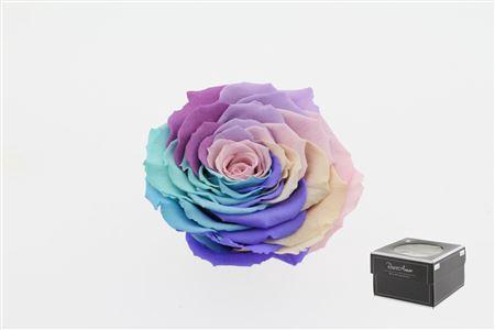 <h4>Pr 5.4 Rainbow Pin-04 Xxl</h4>