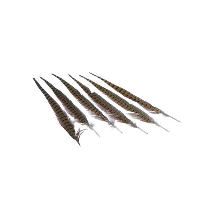 <h4>Feather Pheasant 40-45cm</h4>