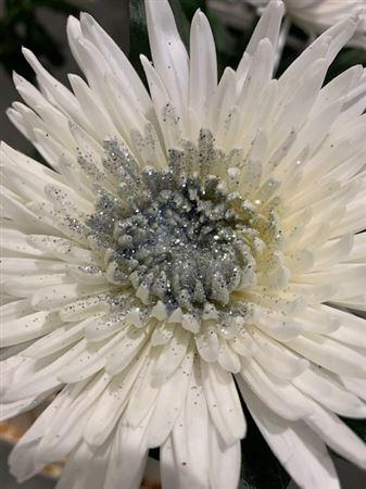 <h4>Chr G Anastasia Sparkling Silver</h4>