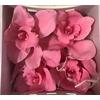 Cymbidium L Licht Roze (pink100)
