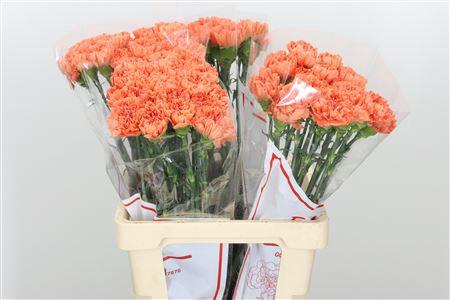 <h4>Di St Orange Tamarind</h4>