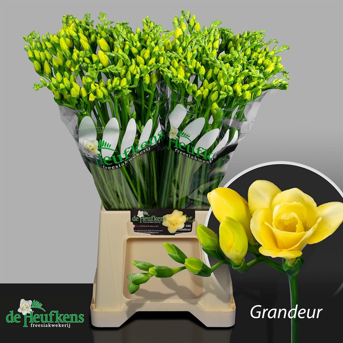 <h4>FR DU GRANDEUR</h4>