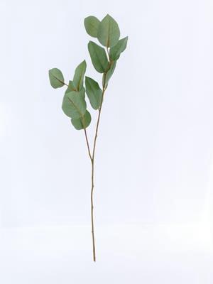 <h4>Af Salal Leaf Spray W/11 Lvs D</h4>