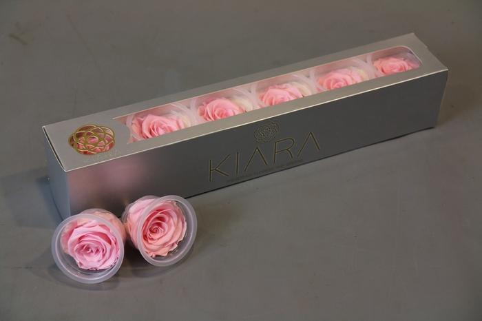 <h4>Rosa Preserved Bridal Pink</h4>