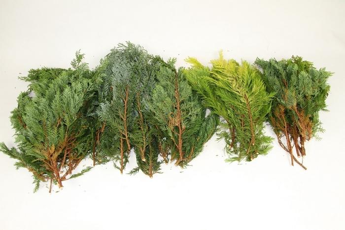 <h4>Coniferen Gemengd 5 kg.</h4>