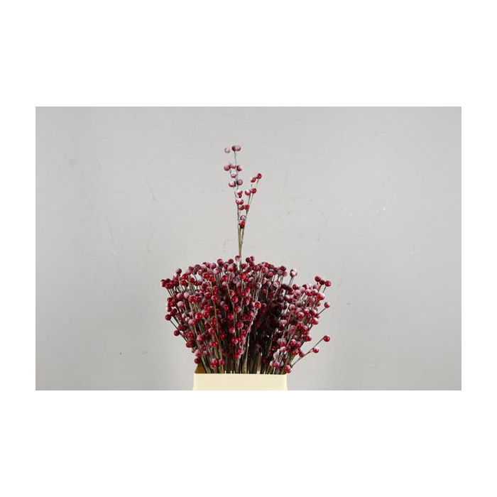 <h4>Stick Berries-twigs Red+snow</h4>