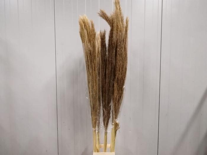 <h4>Corta Dried Natural P St</h4>