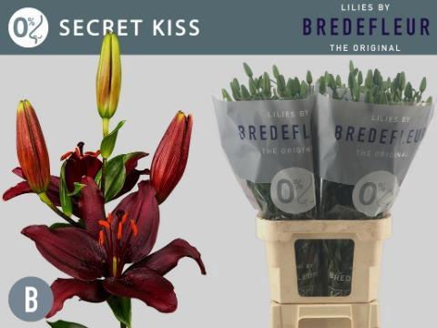<h4>LI AS SECRET KISS</h4>