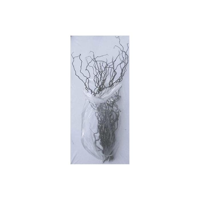 <h4>Coryl Av Contorta 130cm</h4>